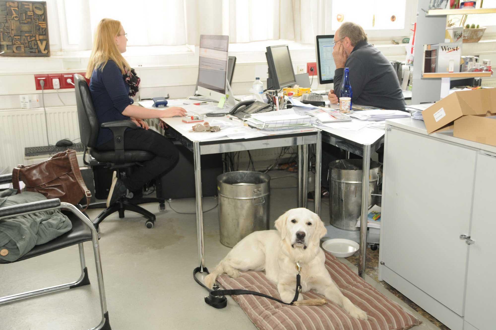 im Büro © Atelier Haase - Foto: Katharina Hansen-Gluschitz